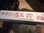 桜a.JPG